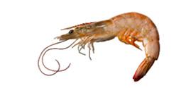 Crustáceos - Langostino - AD Pescado y Marisco - Garciden - Almería